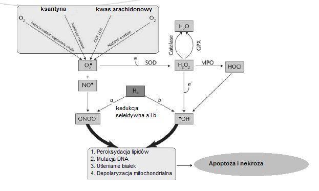 mechanizm działania wodoru